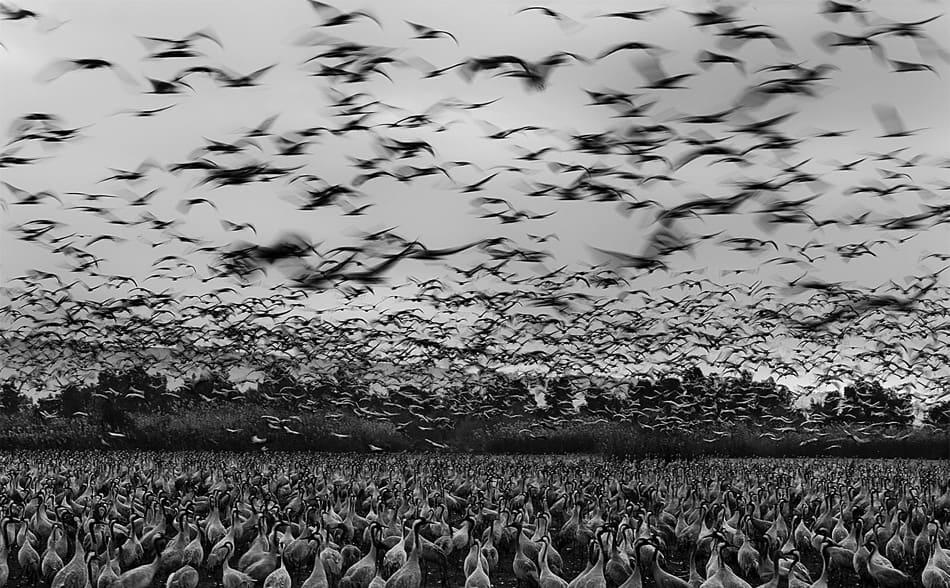 Le foto in bianco e nero di guy cohen fotografare in for Disegni bianco e nero tumblr