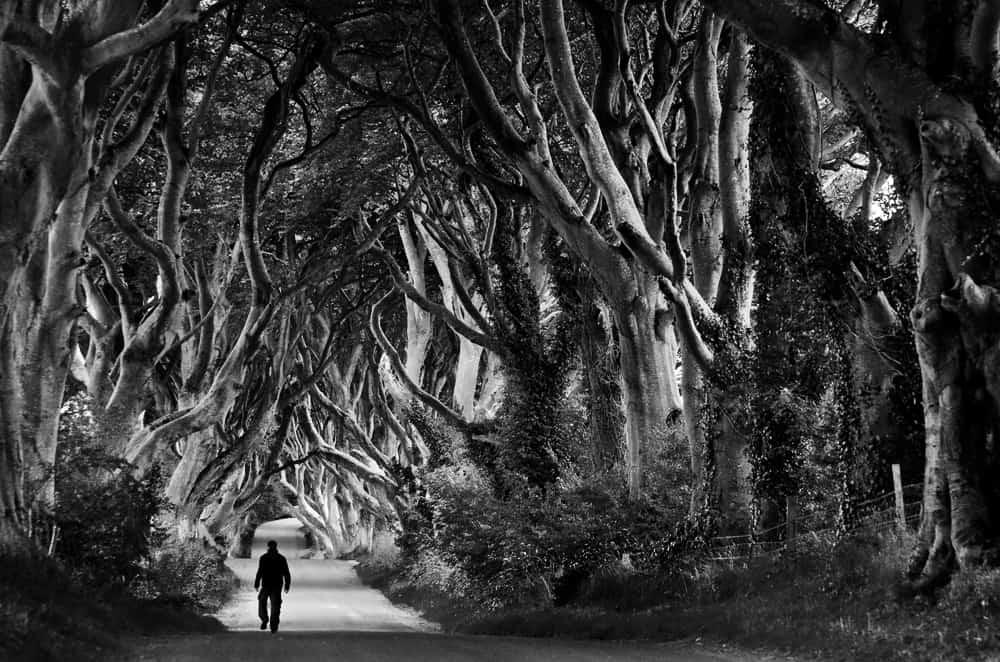 Le foto in bianco e nero di guy cohen fotografare in for Foto alta definizione bianco e nero