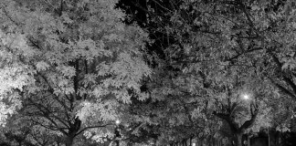 bianco e nero Gorman-Holbert