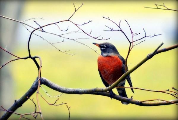 fotografare gli uccelli - copyright Barbara (https://goo.gl/QBVg1o)