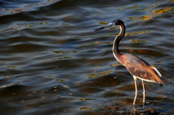 fotografare gli uccelli - Copyright Funkybug (https://goo.gl/UCBjsS)