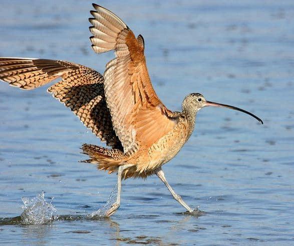 fotografare gli uccelli - Copyright Mike Baird (https://goo.gl/KZQSQ9)