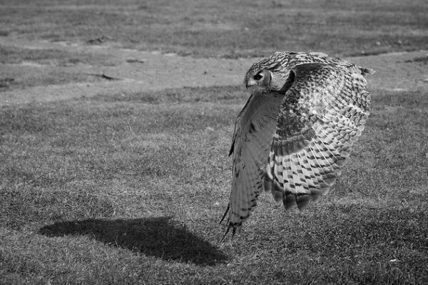 fotografare gli uccelli - Copyright Michael Dales (https://goo.gl/W1LOmW)