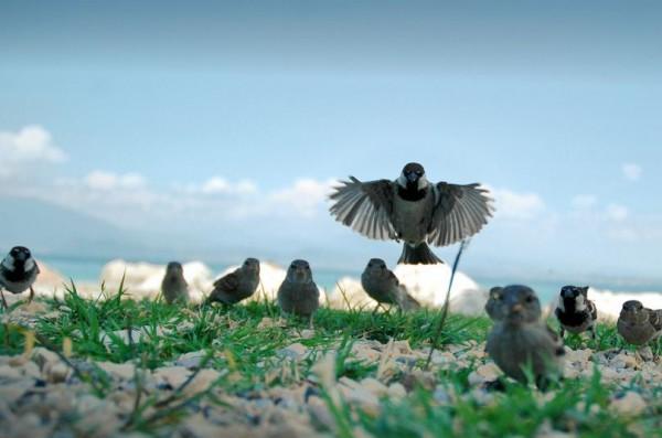 fotografare gli uccelli - Copyright Riccardo Cuppini (https://goo.gl/BzH8ON)