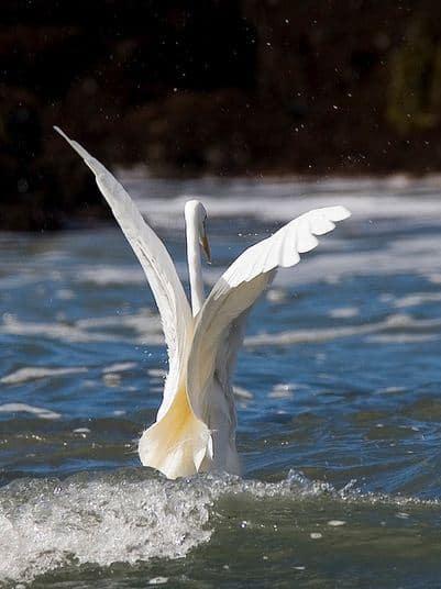 fotografare gli uccelli - Copyright Milke Baird (https://goo.gl/mcm87D)
