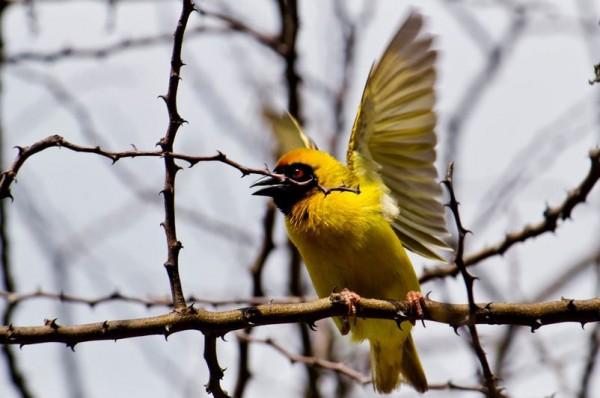 fotografare gli uccelli - Copyright Jack Zalium (https://goo.gl/URtdwY)