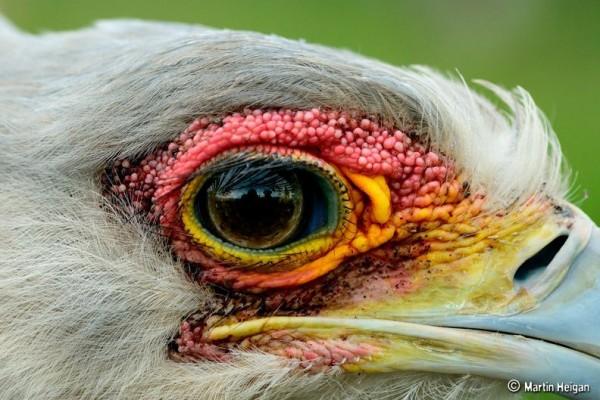 fotografare gli uccelli - Copyright Martin Heigan(https://goo.gl/EX7JII)