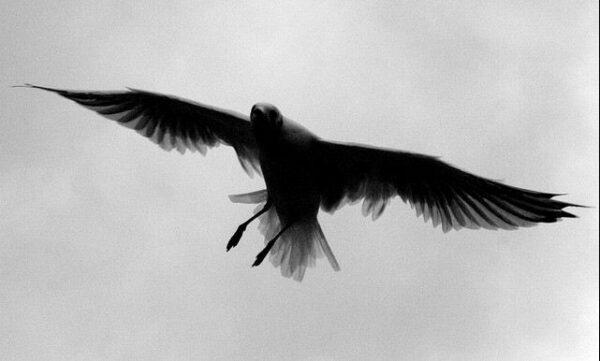 fotografare gli uccelli - Copyright Daniele Muscetta (https://goo.gl/GoMQhm)
