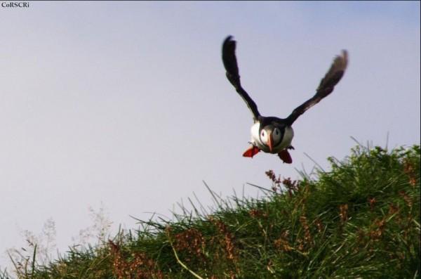 fotografare gli uccelli - Copyright Cristiano Corsini (https://goo.gl/ifcfJ2)