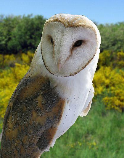 fotografare gli uccelli - Copyright Giovanni (https://goo.gl/XqyITY)