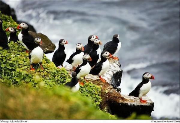 fotografare gli uccelli - copyright Francesco (https://goo.gl/2Q1Pdw)