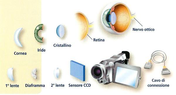 Occhio umano e fotocamera: tantissimi i punti in comune