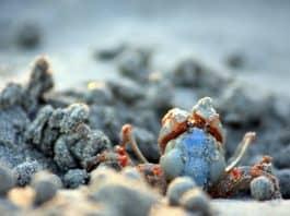 fotografia naturalistica marina