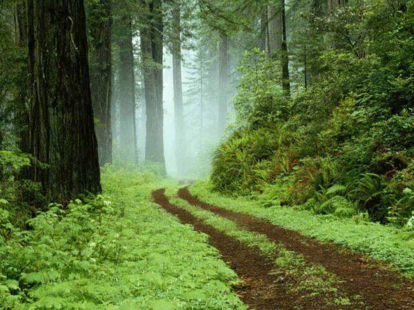 fotografare le foreste
