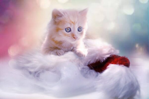 foto di gattini