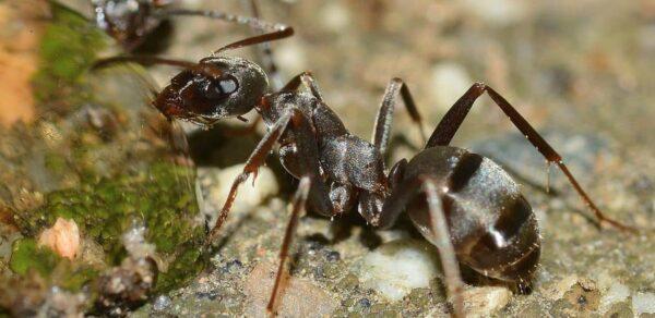 suggerimenti sulla fotografia di insetti