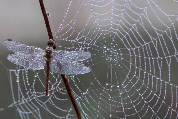 Suggerimenti per la fotografia degli insetti