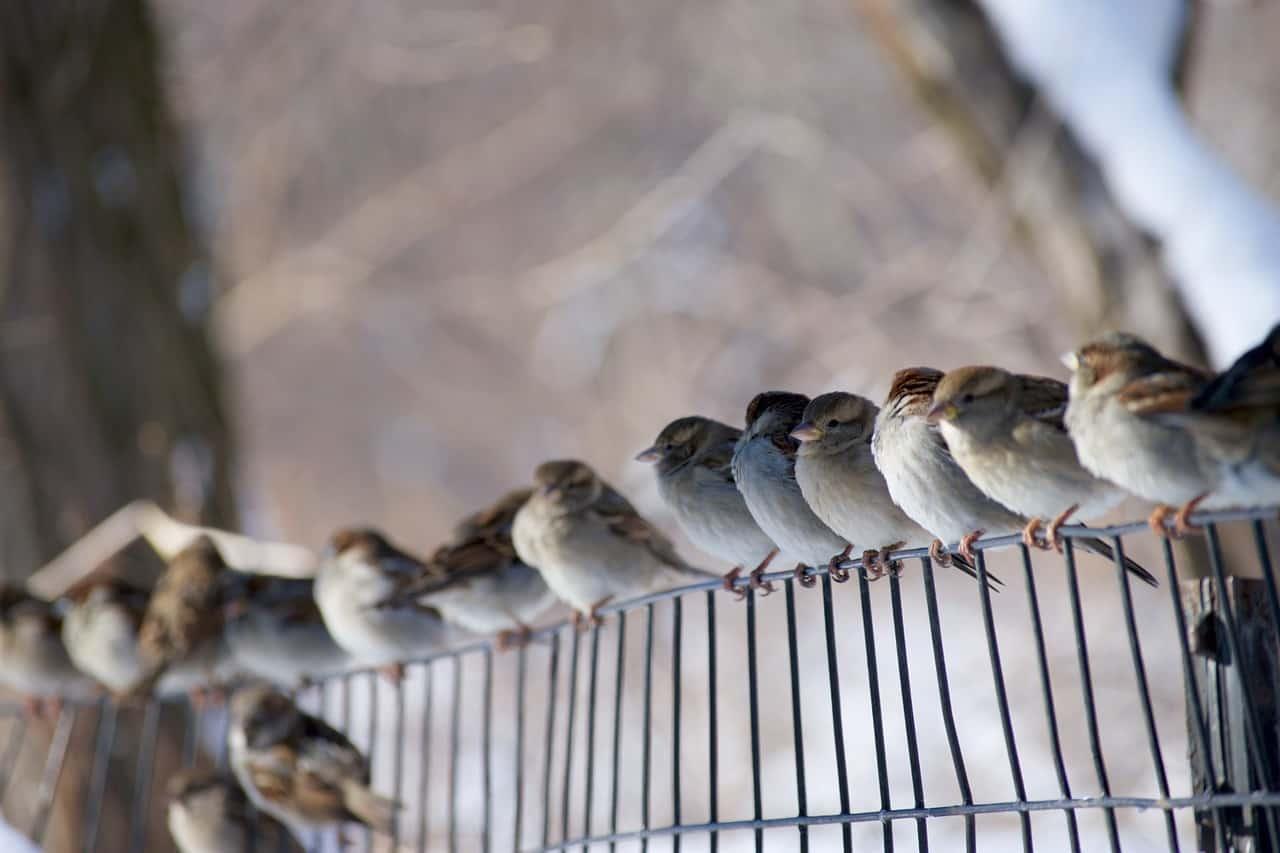 come fotografare gli uccelli