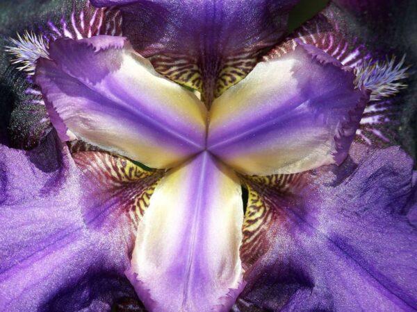 fotografia astratta di fiori