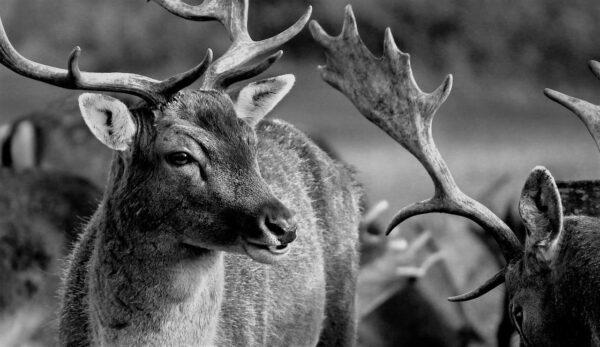 Fotograre la fauna selvatica