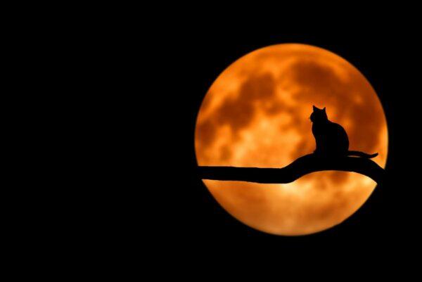 tree, cat, silhouette