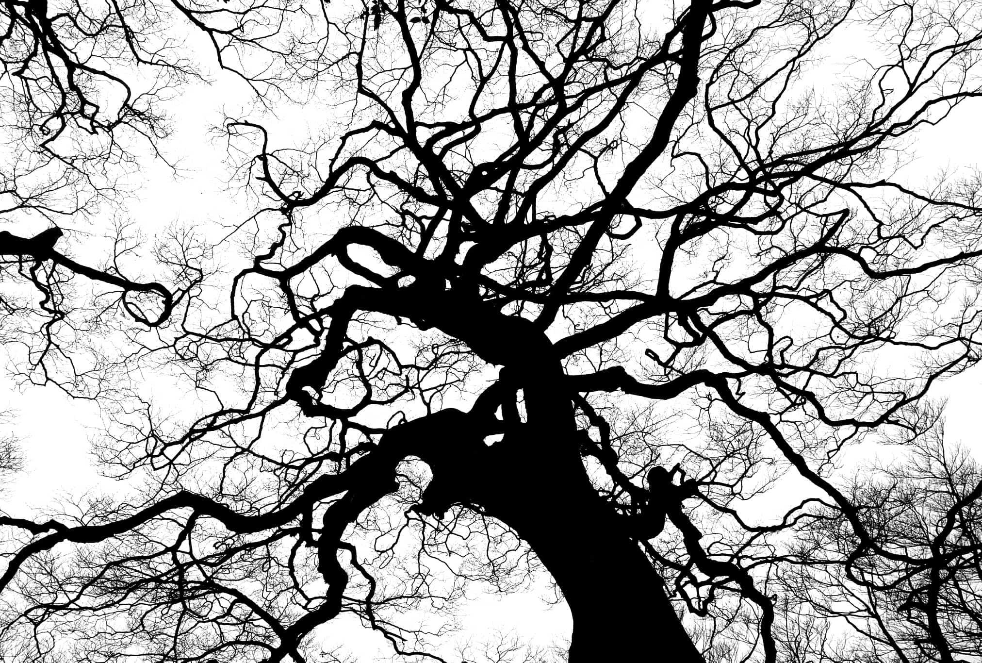 immagine monocromatica, guida definitiva al bianco e nero