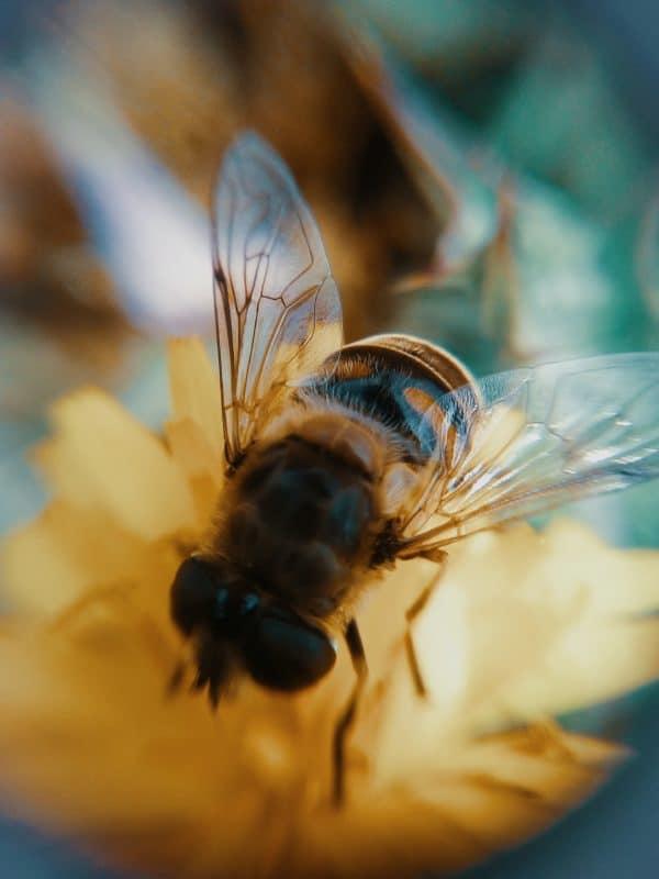 fotografare le api