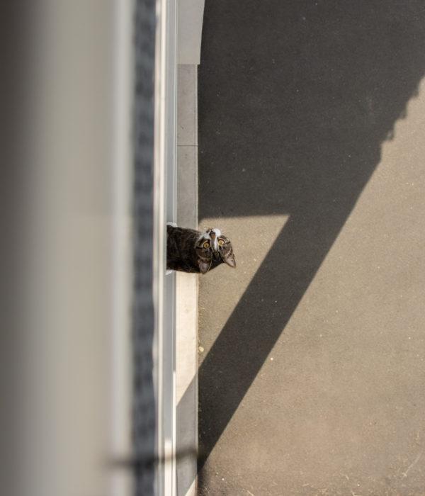 Brown tabby cat on gray concrete floor