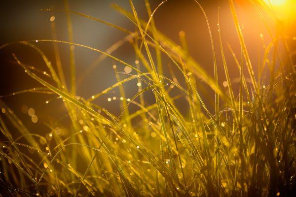 fotografare la natura nel tuo cortile